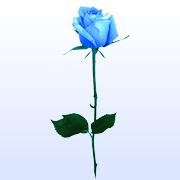 rosaphoto2.jpg